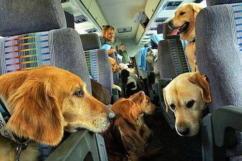 Перевозка животных в самолете по России: правила