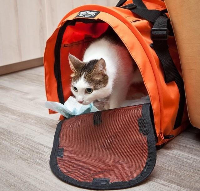 Багаж и ручная кладь ВИМ-Авиа: правила перевозки