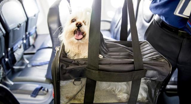 Правила провоза багажа Ютэйр: стоимость, размеры, вес