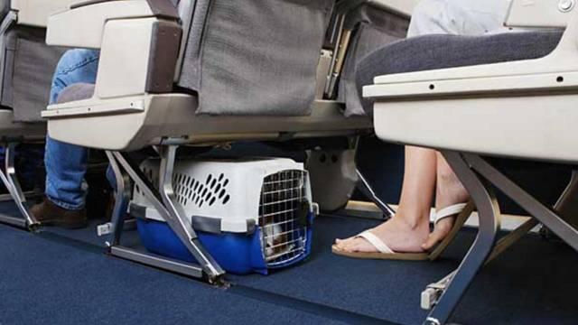Перевозка животных в самолете Аэрофлот