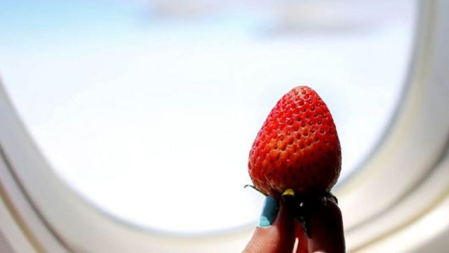 Как провезти фрукты в самолете